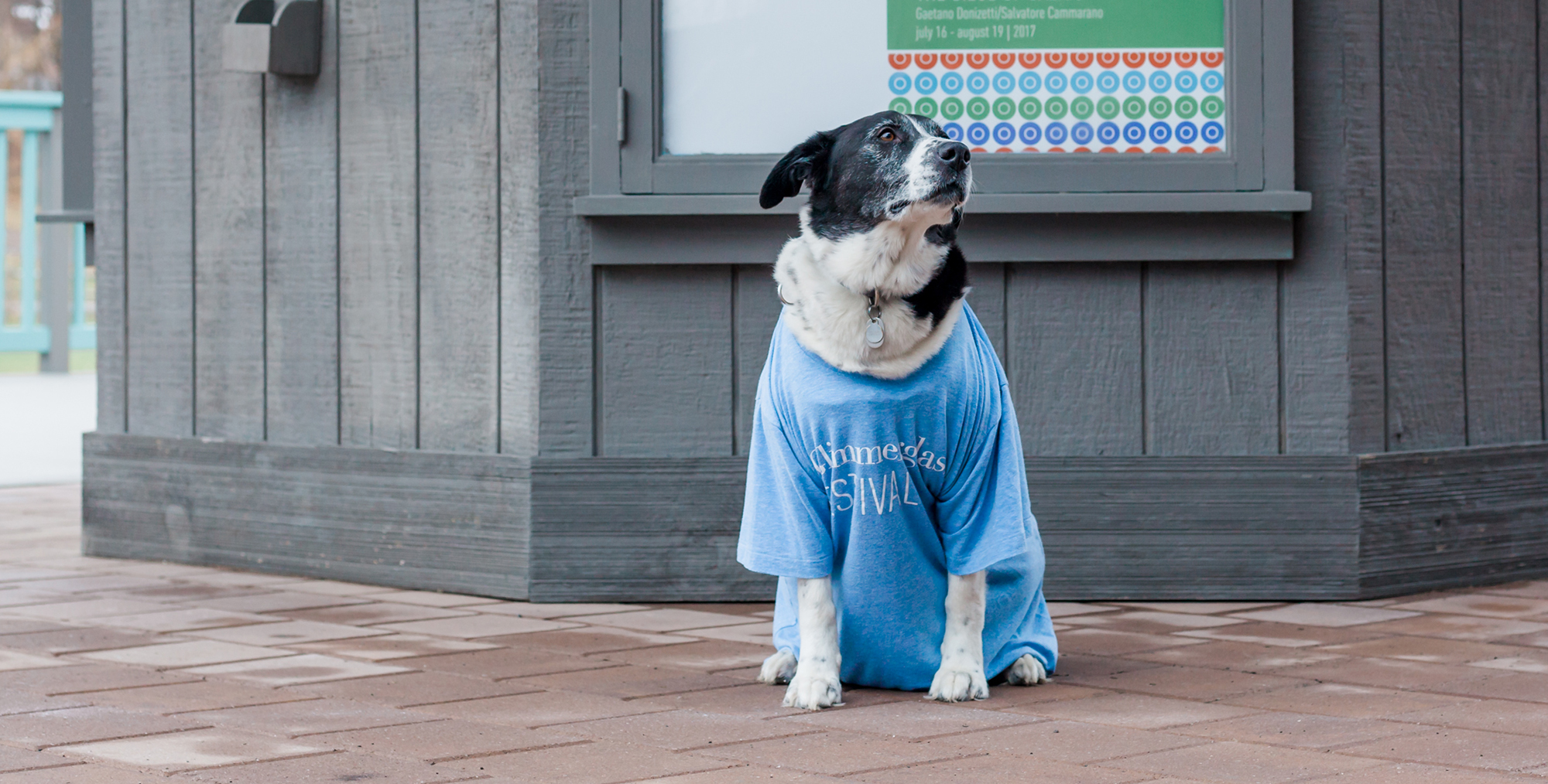 Black and white dog sits wearing a blue Glimmerglass shirt