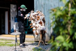 A costume crafts technician dressed in a black jumper and a green hat, works on a large feathered piece outdoors near a green barn on the Glimmerglass campus.