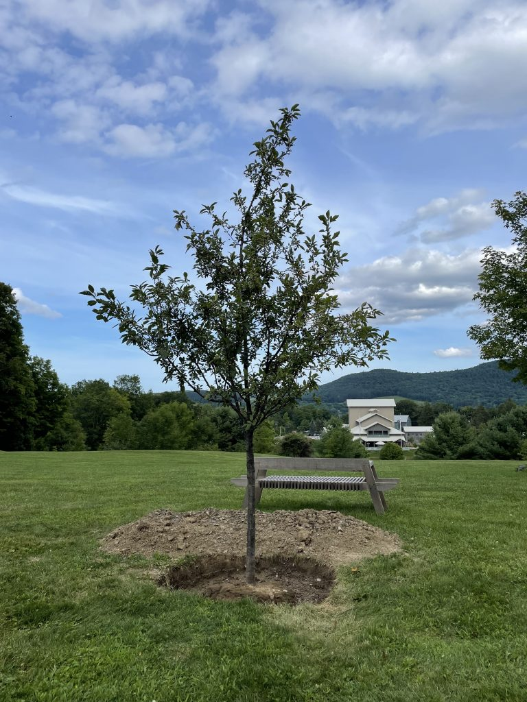 A photograph taken on a sunny day of a small apple tree that has just been planted; taken on a summer day. A theater can be seen in the background off to the right.
